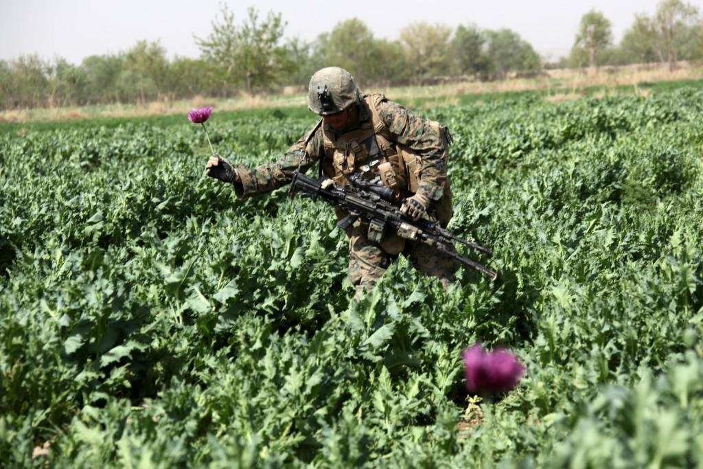 US Troop crossing a poppy field in Helmand Province, Afghanistan.