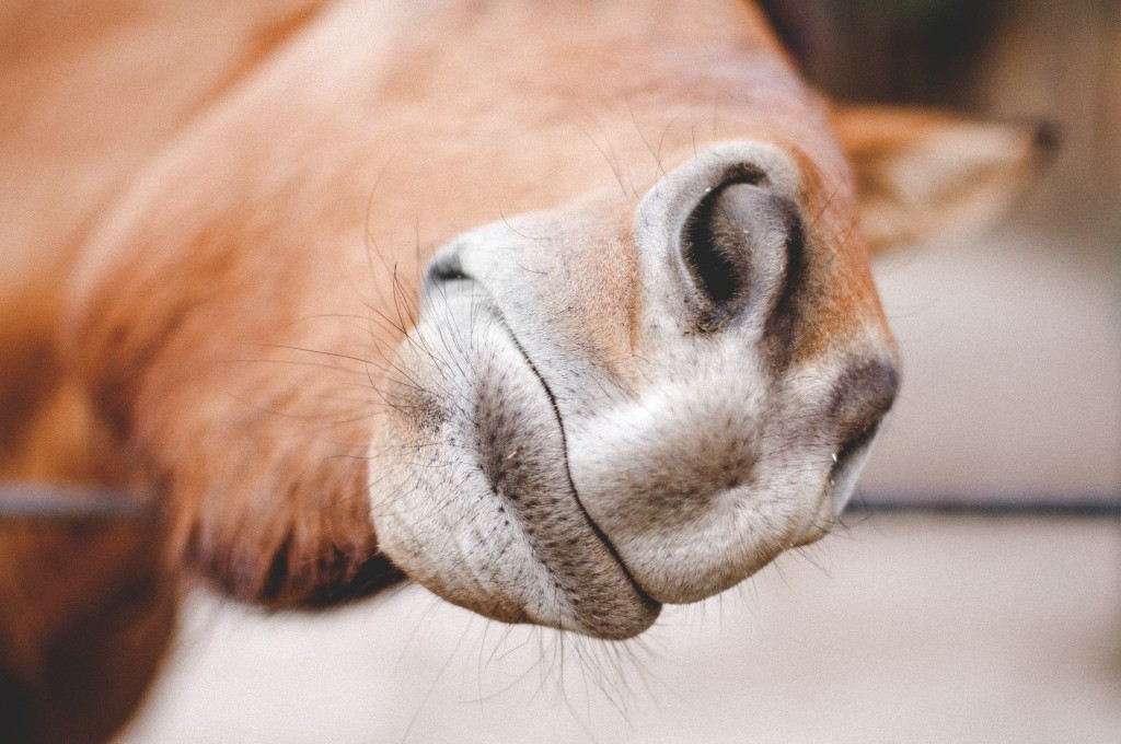 Ketamine is also regularly used as a horse tranquilliser.