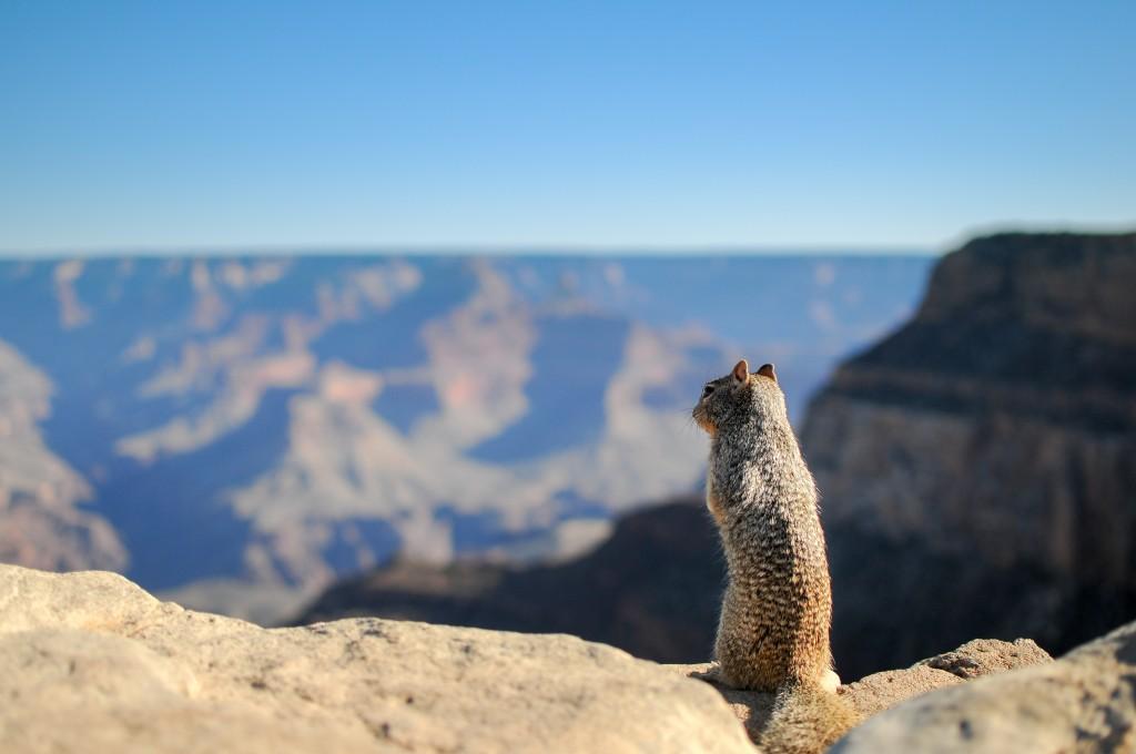 landscape-animal-mountain-top