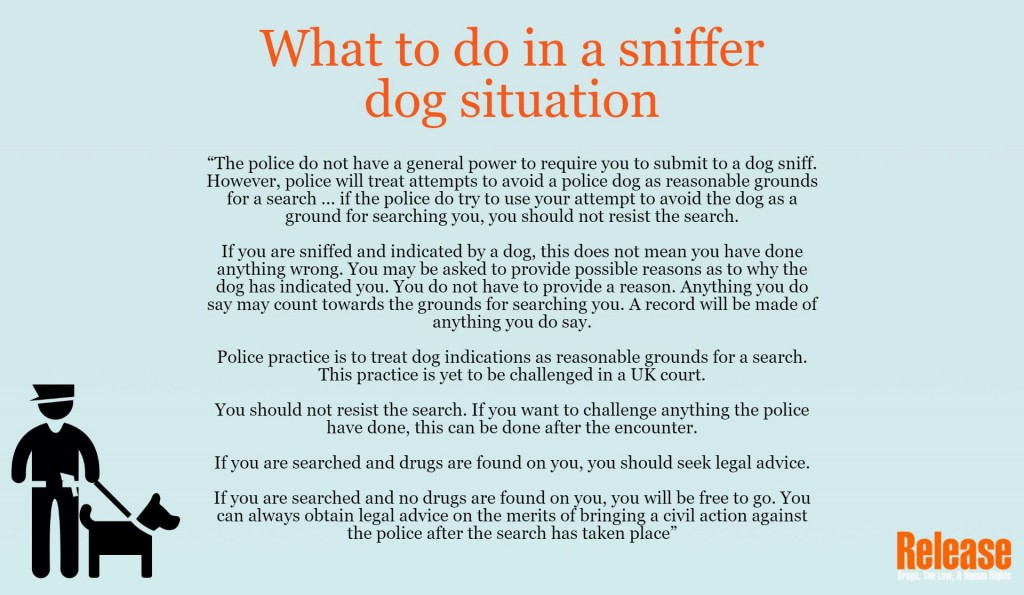 What to do in a sniffer dog situation